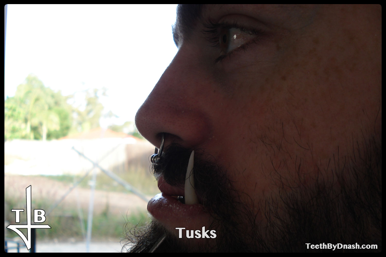 http://tusks-other_tooth_fx-teeth_by_dnash-07