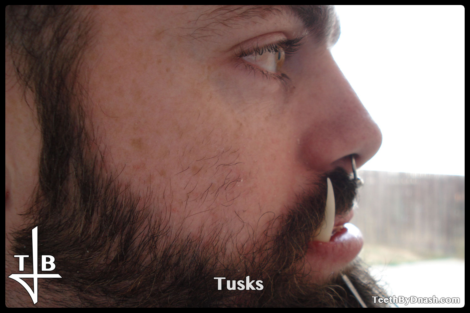 http://tusks-other_tooth_fx-teeth_by_dnash-08